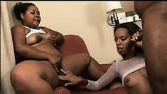 Noisy ebony sluts are sniffing around that venous and tasty prick
